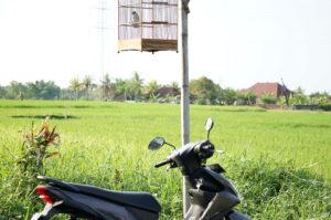 インドネシアでの写真